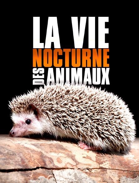 La vie nocturne des animaux