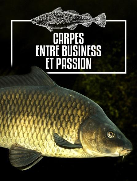 Carpes, entre business et passion
