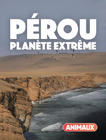 Animaux - Pérou : planète extrême