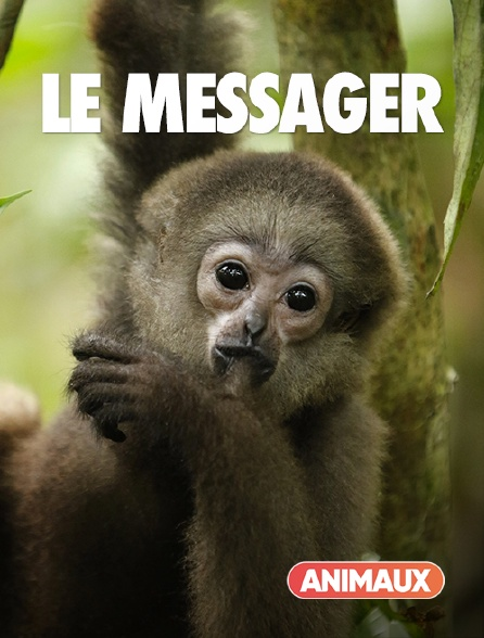 Animaux - Le messager
