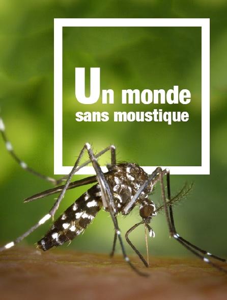 Un monde sans moustique