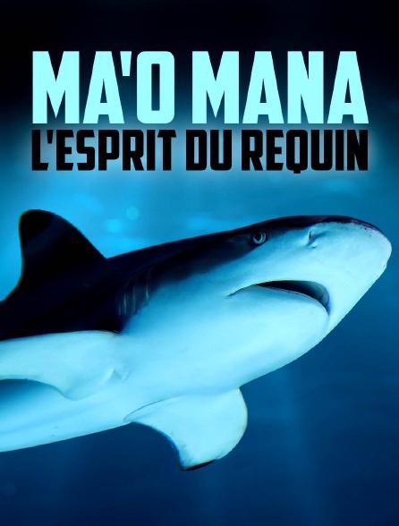Ma'o Mana l'esprit du requin