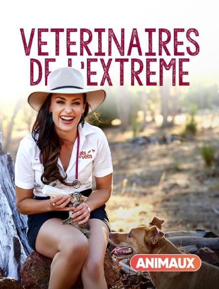 Animaux - Australie, vétérinaires de l'extrême