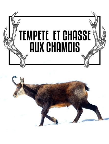 Tempête et chasse aux chamois