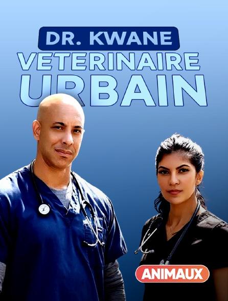 Animaux - Dr. Kwane, vétérinaire urbain