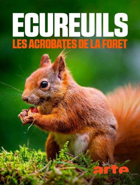 Arte - Ecureuils, les acrobates de la forêt