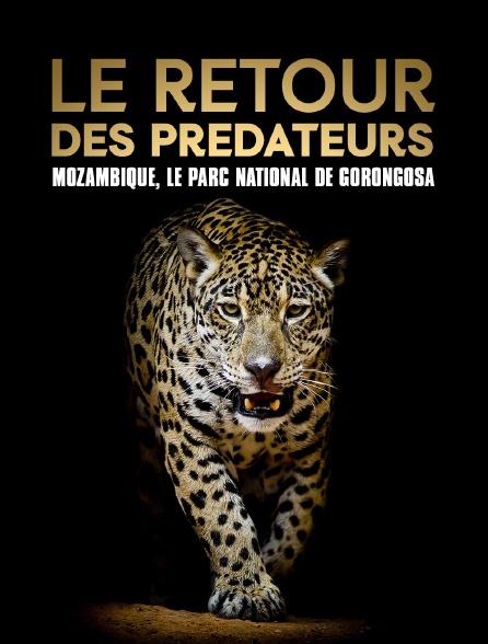 Le retour des prédateurs : Mozambique, le parc national de Gorongosa