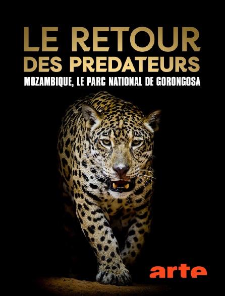 Arte - Le retour des prédateurs : Mozambique, le parc national de Gorongosa