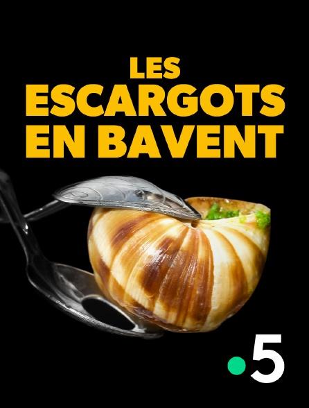 France 5 - Les escargots en bavent