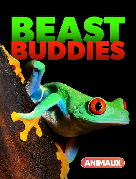 Animaux - Beast Buddies