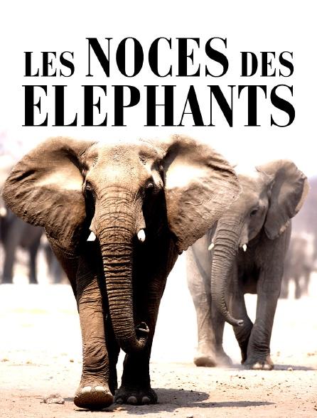 Les noces des éléphants