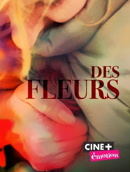 Ciné+ Emotion - Des fleurs