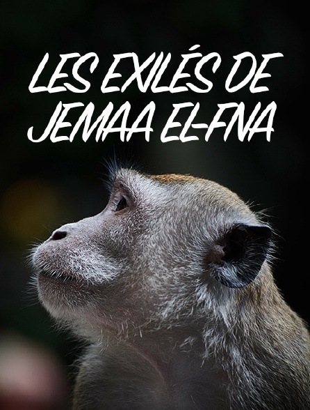 Les exilés de Jemaa el-Fna