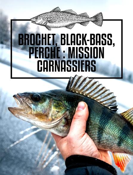 Brochet, black-bass, perche : mission carnassiers