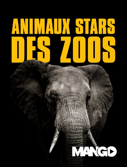 Mango - Animaux stars des zoos