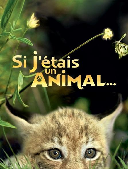 Si j'étais un animal