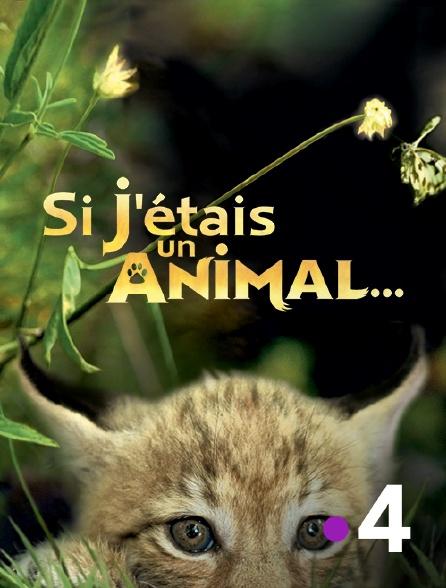France 4 - Si j'étais un animal