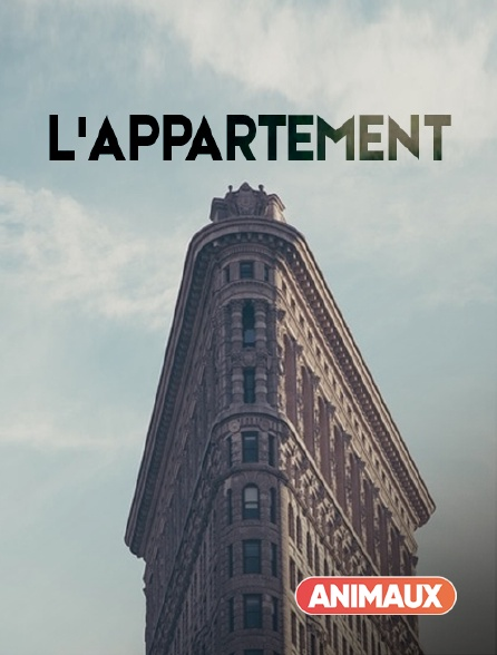 Animaux - L'appartement