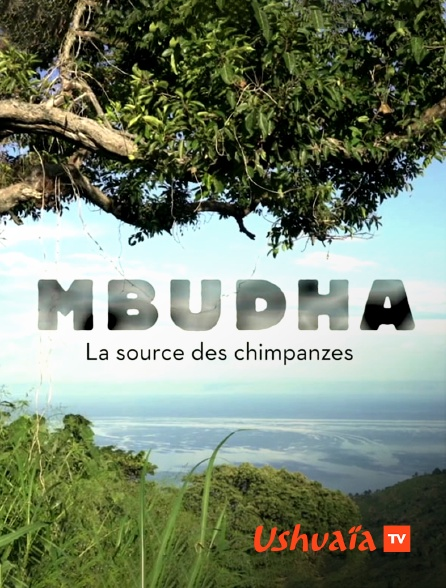 Ushuaïa TV - Mbudha, la source des chimpanzés