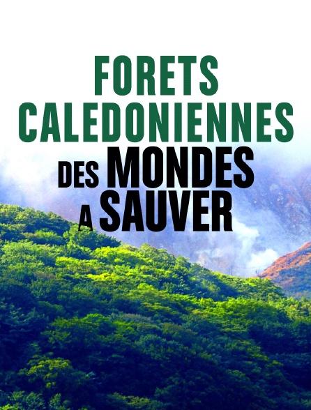 Forêts calédoniennes, des mondes à sauver
