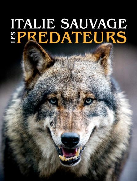 Italie sauvage : les prédateurs