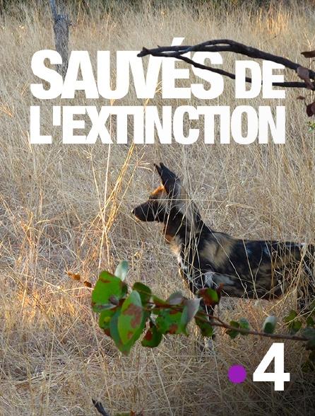 France 4 - Sauvés de l'extinction