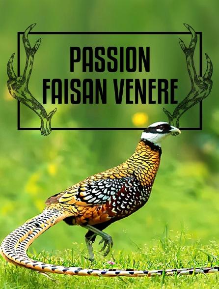 Passion faisan vénéré
