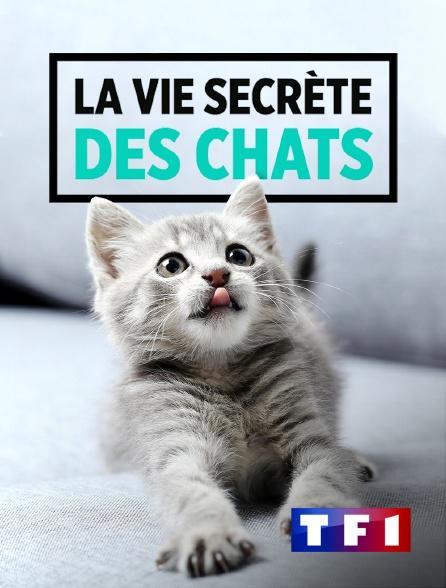 TF1 - La vie secrète des chats