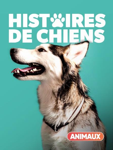 Animaux - Histoires de chiens