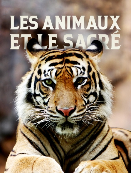 Les animaux et le sacré