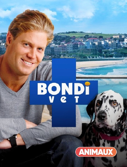Animaux - Le vétérinaire de Bondi Beach en replay