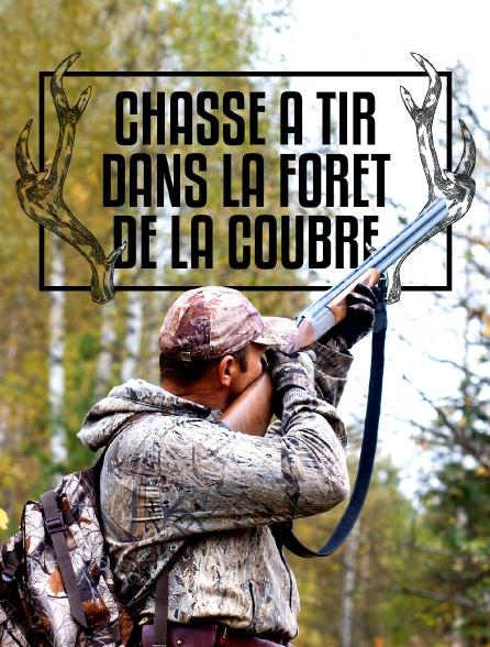 Chasse à tir dans la forêt de la Coubre