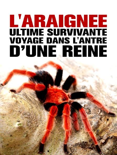 L'Araignée, ultime survivante - Voyage dans l'antre d'une reine