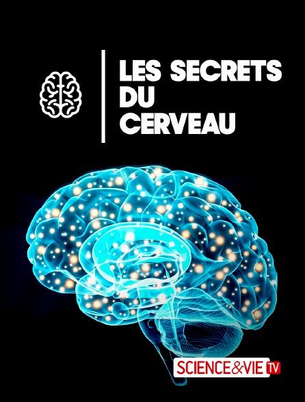 Science et Vie TV - Les secrets du cerveau