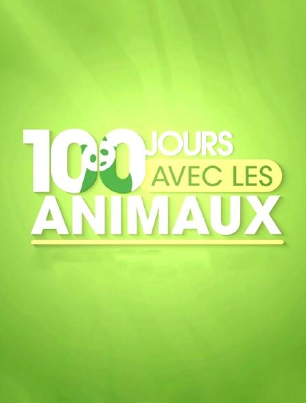 100 jours avec les animaux du zoo