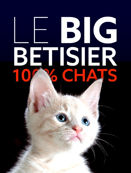 Le big bêtisier 100% chats