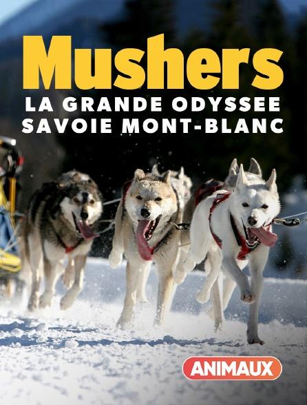 Animaux - Mushers, la grande odyssée Savoie Mont-Blanc