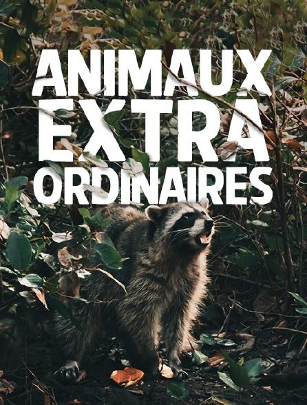 Animaux extraordinaires