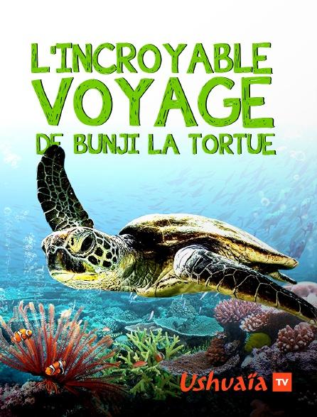 Ushuaïa TV - L'incroyable voyage de Bunji la tortue