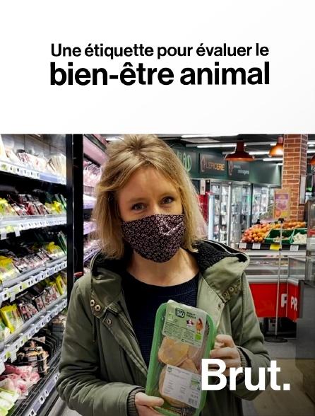 Brut - Une étiquette pour évaluer le bien-être animal