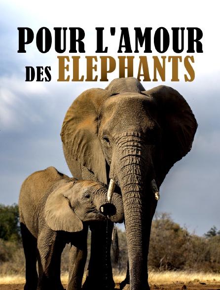 Pour l'amour des éléphants