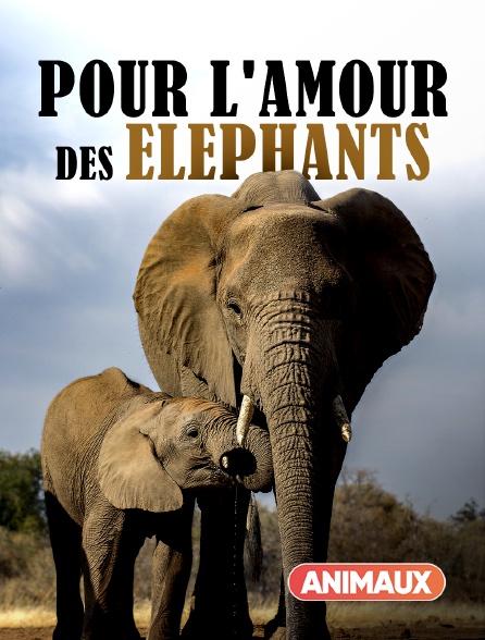 Animaux - Pour l'amour des éléphants