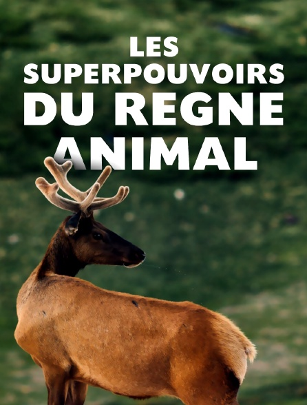 Les superpouvoirs du règne Animal