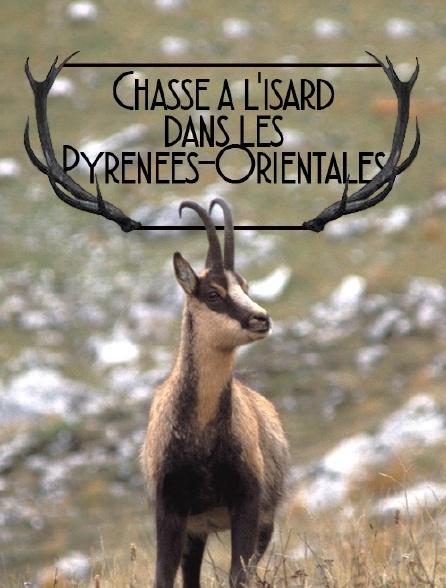 Chasse à l'isard dans les Pyrénées-Orientales