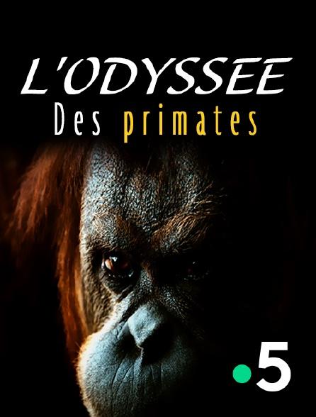 France 5 - L'odyssée des primates