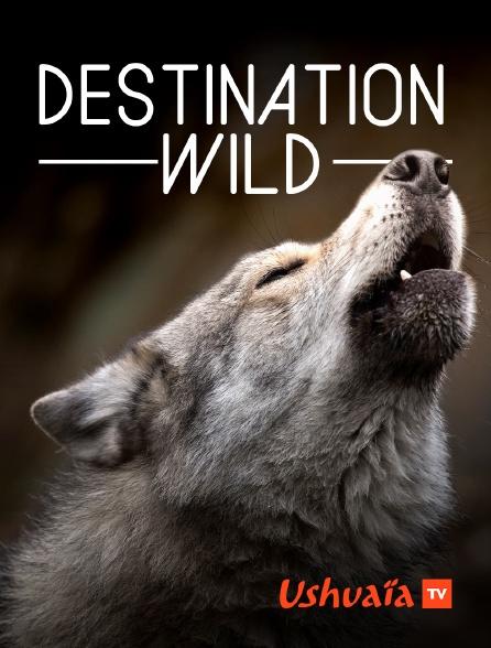 Ushuaïa TV - Destination Wild