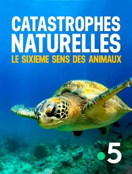 France 5 - Catastrophes naturelles : le sixième sens des animaux
