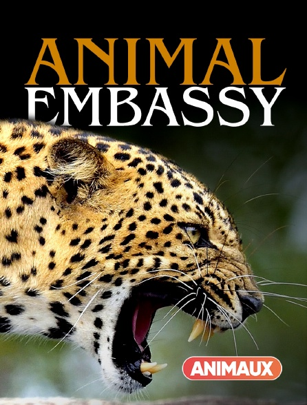 Animaux - Animal Embassy