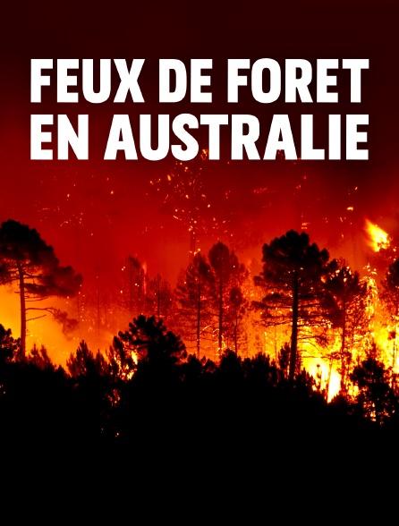 Feux de forêt en Australie : Au secours de la faune sauvage