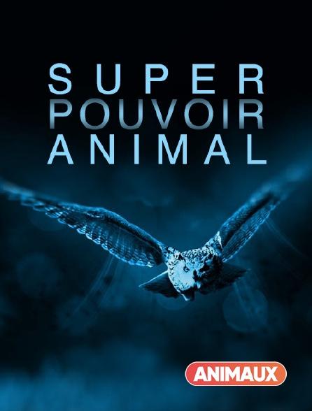 Animaux - Super pouvoir animal